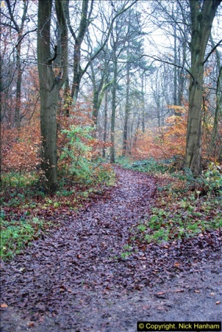 2014-11-21 The Woodland in Winter. Wendover Woods, Buckinhhamshire.  (45)045