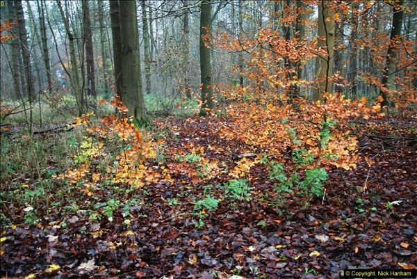 2014-11-21 The Woodland in Winter. Wendover Woods, Buckinhhamshire.  (158)158