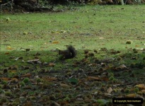 2012-10-18 Visit to Brownsea Island, Poole Harbour, Dorset.  (91)091