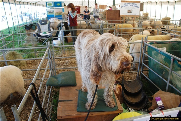 2017-09-02 The Dorset County Show 2017.  (171)171