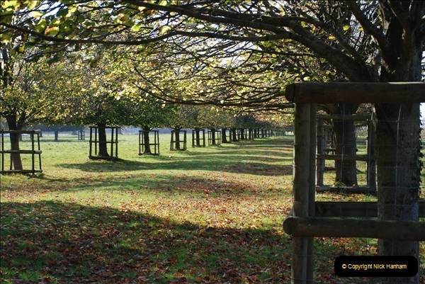 2018-10-21 Dyrham Park (NT) Autumn Colour. Near Bath, Somerset.  (56)056