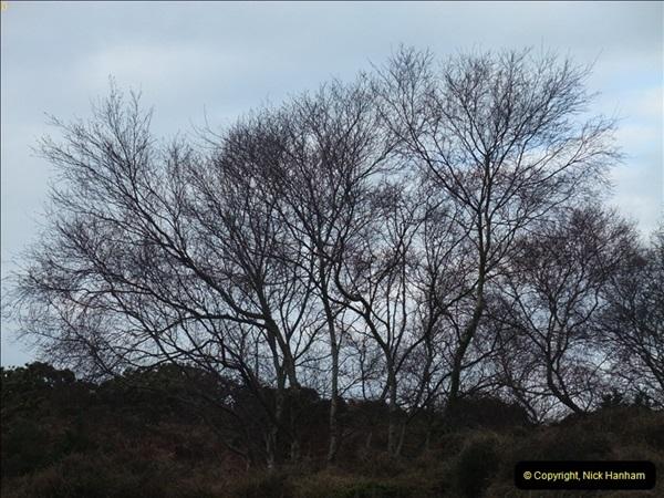 2013-01-21 Corfe Castle, Dorset.  (2)002