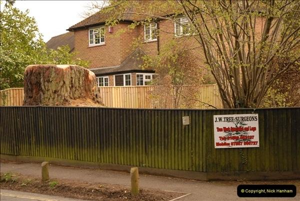 2013-04-26 Brockenhurst, Hampshire.  (3)022