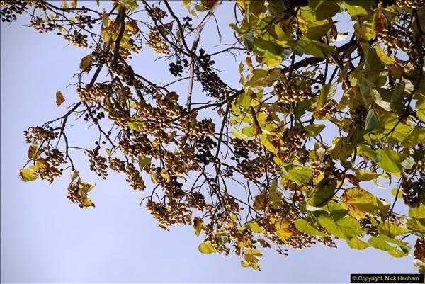 2013-10-24 Sevastopol, Ukraine.  (3)187