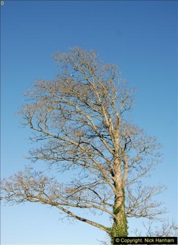 2014-01-19 Torquay, Devon.  (4)199