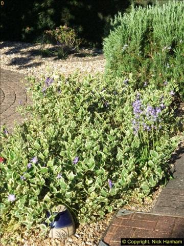 2014-04-15 Your Host's garden. (4)223