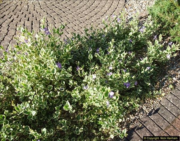 2014-04-15 Your Host's garden. (6)225