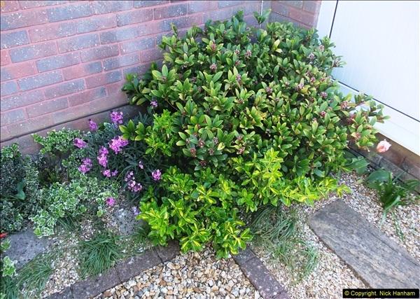 2014-04-15 Your Host's garden. (8)227
