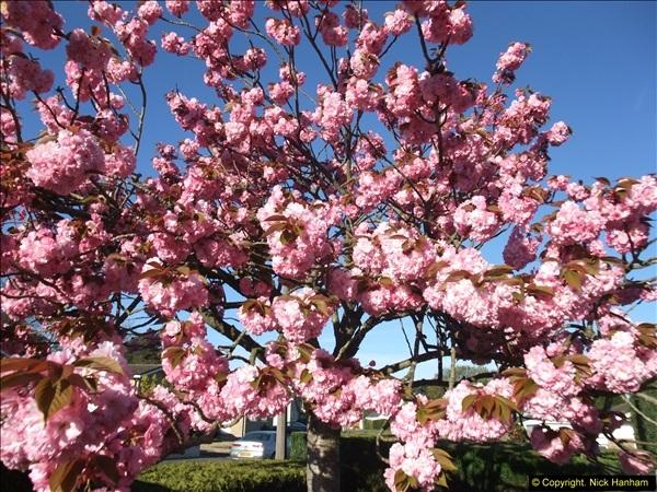 2014-04-15 Your Host's garden. (9)228