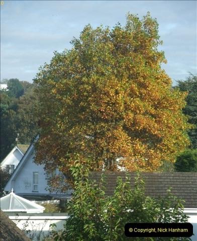 TREES (1)260