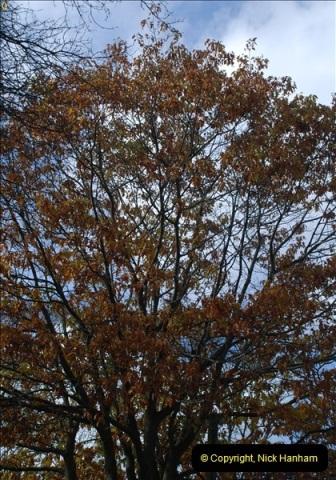 TREES (14)273