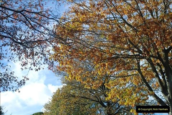 TREES (15)274