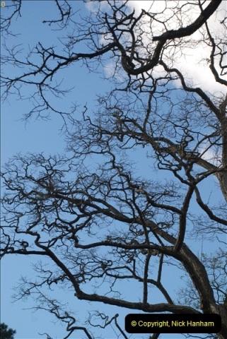 TREES (21)280