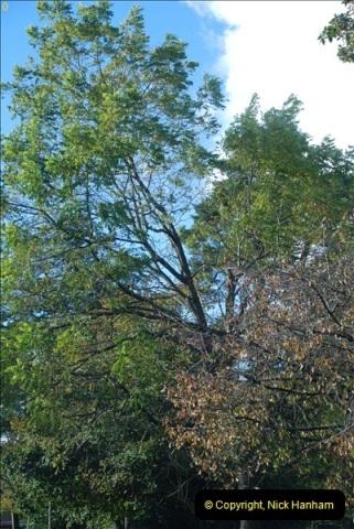 TREES (24)283