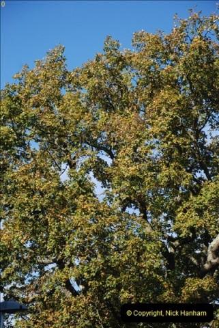 TREES (28)287