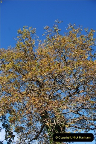 TREES (29)288