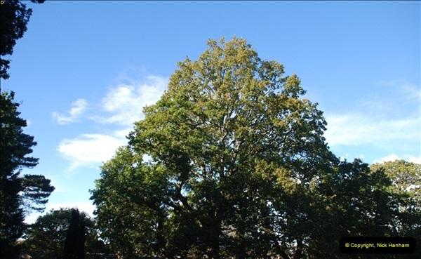 TREES (33)292