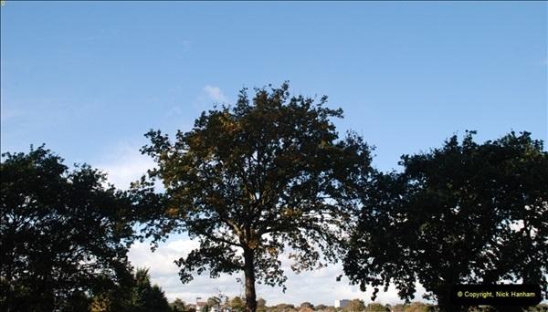 TREES (35)294