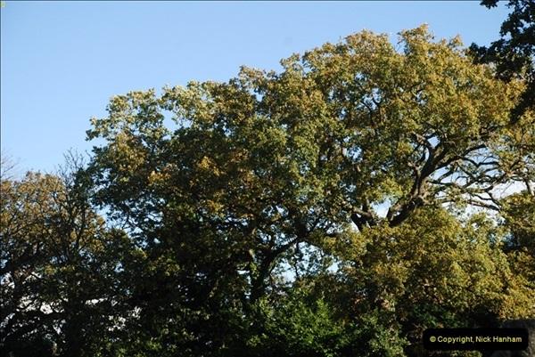 TREES (38)297