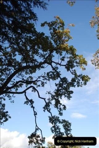 TREES (39)298