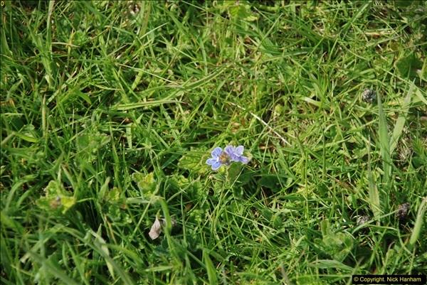 2016-05-06 In the Corfe Castle area, Dorset.  (13)35