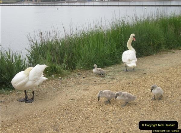2018-06-07 Poole Park, Poole, Dorset.  (5)38