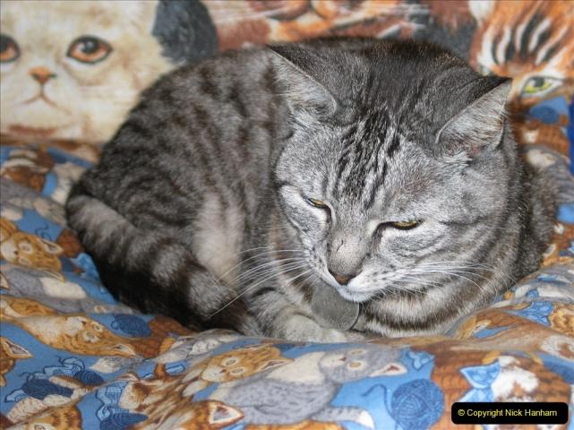 2005 to 2010 Cleo. (154) 154