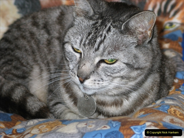 2005 to 2010 Cleo. (155) 155