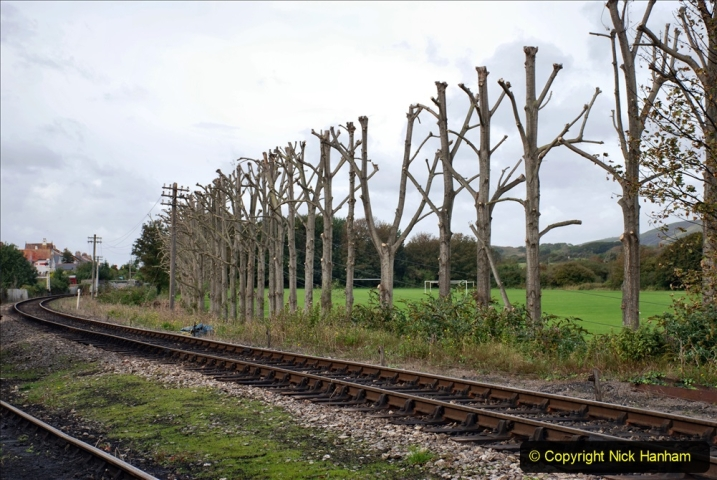 2019-10-09 Corfe Castle - Swanage - Norden. (45) Pollarded trees at King George Field.45