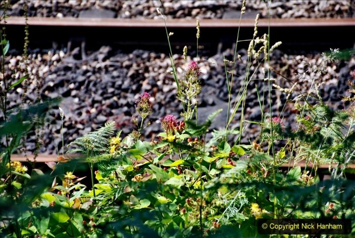 2020-06-23 Swanage Railway still in lockdown. (102) Harmans Cross. 102
