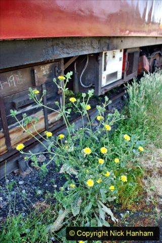 2020-06-23 Swanage Railway still in lockdown. (122) Swanage. 122