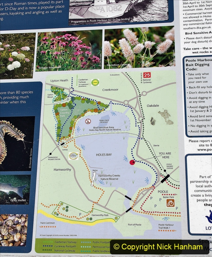 2020-07-31 Covid 19 Walk Poole Inner Harbour to Upton Country Park and return. (2)