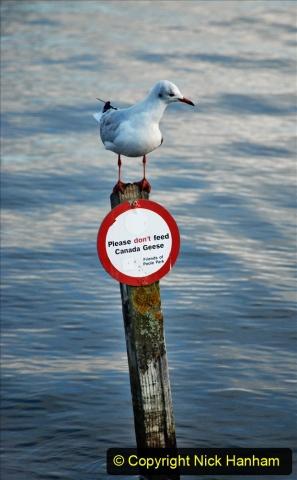 2020-10-26 Poole Park, Poole, Dorset. (1) 003