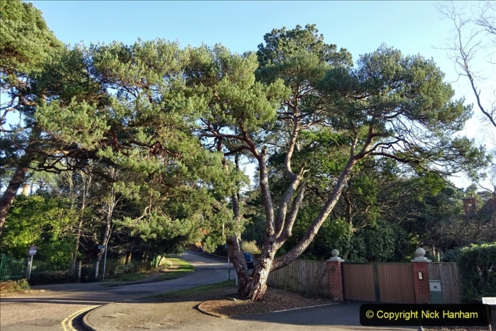2021-02-28 Local Covid 19 Walk around the Evening Hill area of Poole. (6) 006
