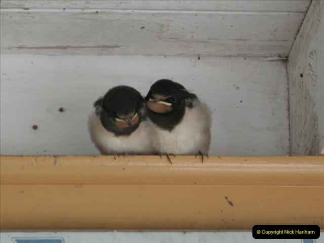 2008-09-05 Norden Nest. Found in station building. (2)0233