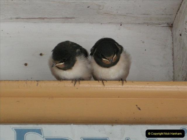2008-09-05 Norden Nest. Found in station building. (4)0235