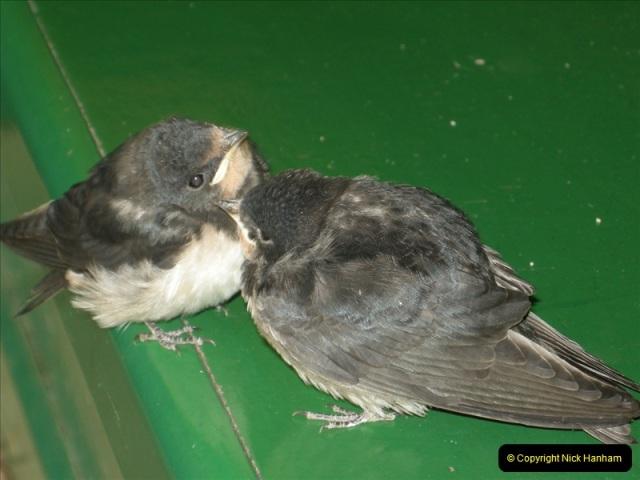 2008-09-05 Norden Nest. Found in station building. (7)0238