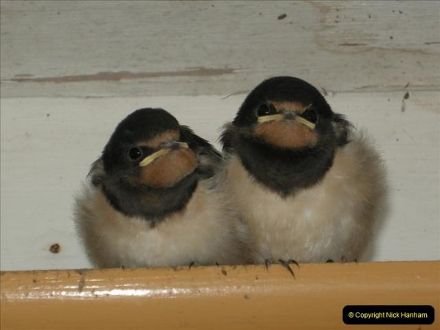 2008-09-05 Norden Nest. Found in station building. (8)0239