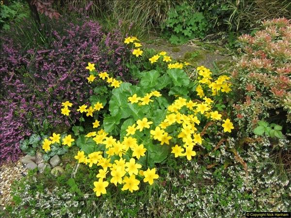2018-04-14 A Poole Garden in Spring.  (102)102