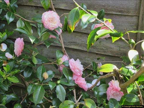 2018-04-14 A Poole Garden in Spring.  (24)024