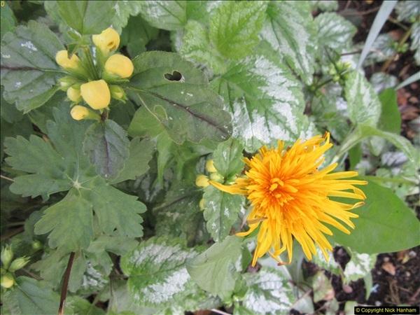2018-04-14 A Poole Garden in Spring.  (30)030