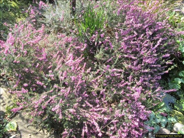2018-04-14 A Poole Garden in Spring.  (34)034