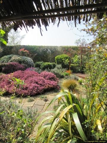 2018-04-14 A Poole Garden in Spring.  (66)066