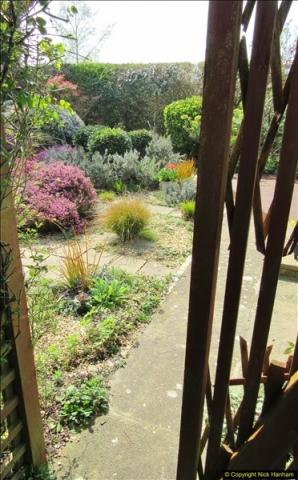 2018-04-14 A Poole Garden in Spring.  (70)070