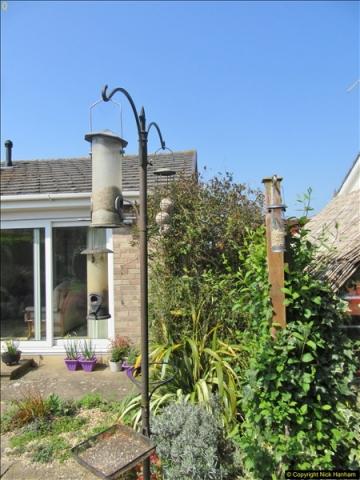 2018-04-14 A Poole Garden in Spring.  (73)073