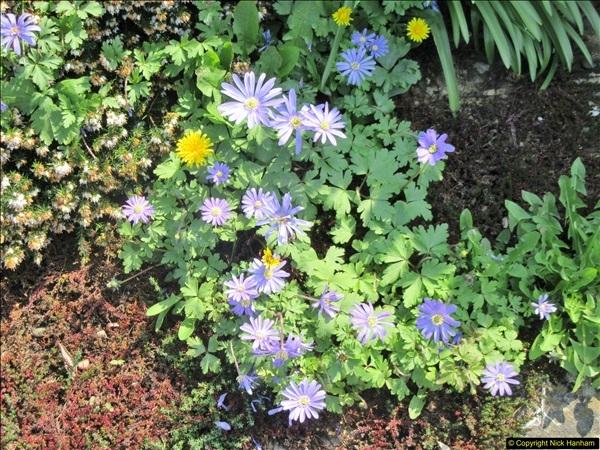 2018-04-14 A Poole Garden in Spring.  (80)080