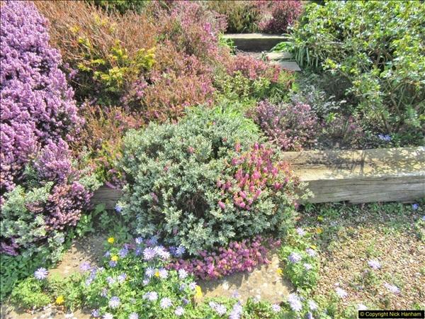 2018-04-14 A Poole Garden in Spring.  (81)081