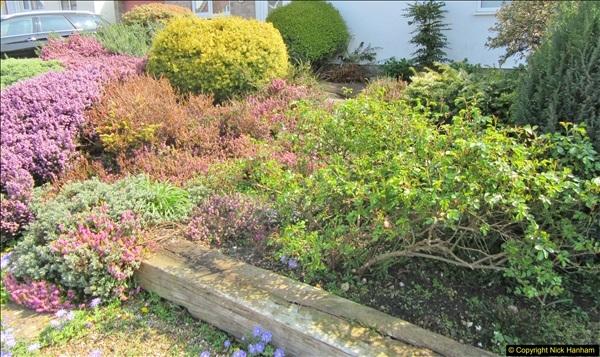 2018-04-14 A Poole Garden in Spring.  (82)082