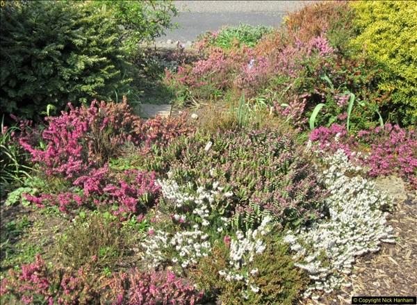 2018-04-14 A Poole Garden in Spring.  (90)090