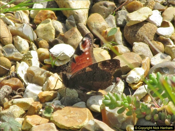 2018-04-14 A Poole Garden in Spring.  (95)095